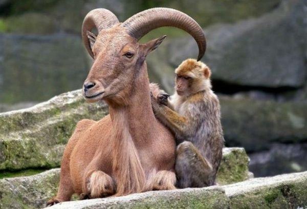 Ungewöhnliche Tierfreundschaften – 15 coole Fotos für die gute Laune