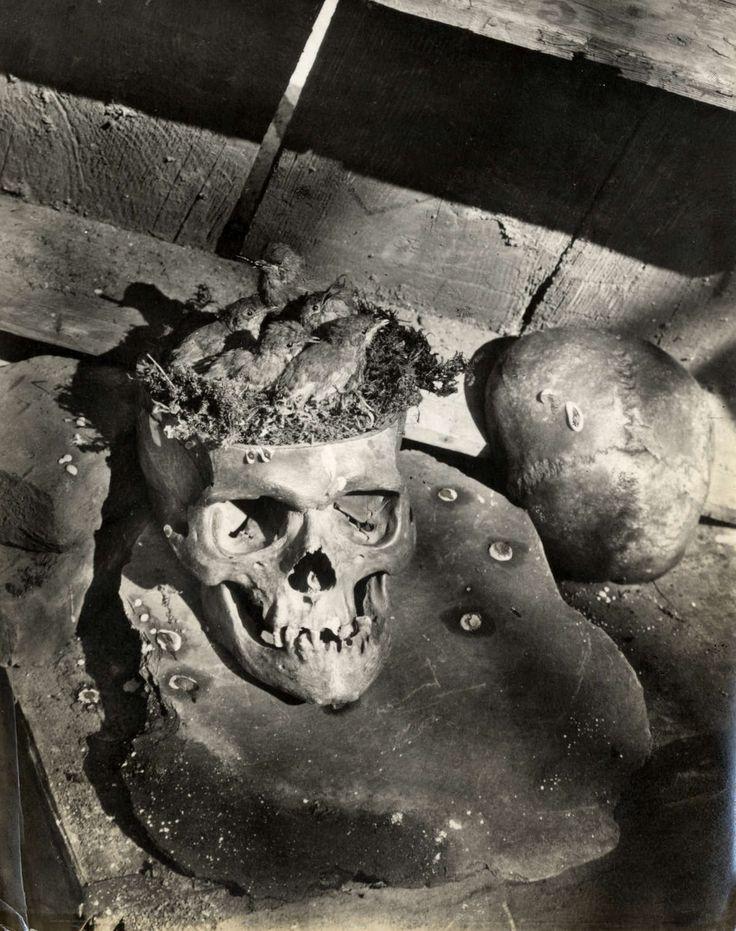 Vogelnesten op vreemde plaatsen. Doodshoofd of schedel als broedplaats voor roodborstjes, Duitsland 1932