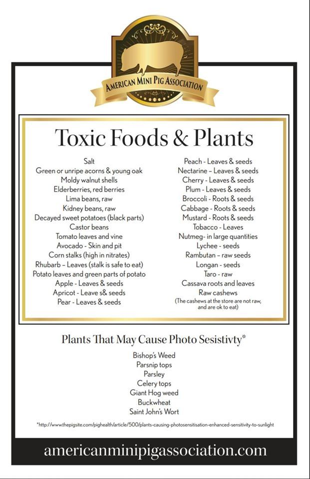 Mini Pig Toxic Plant/Food List