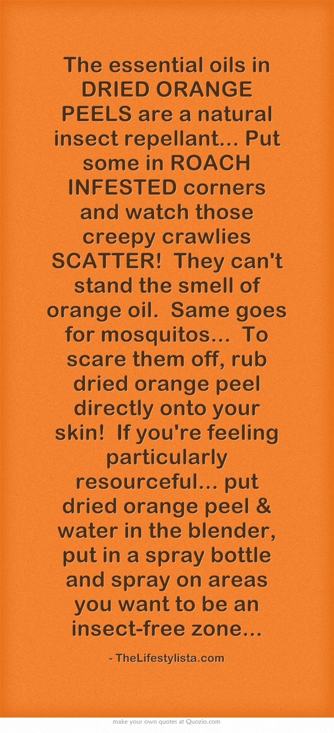 The essential oils in DRIED ORANGE PEELS are a natural insect repellant... Put some in ROACH INFESTED corners and watch those creepy crawlies SCATTER! They cant stand the smell of orange oil. Same goes for mosquitos... To scare them off, rub dried orange peel directly onto your skin! If youre feeling particularly resourceful... put dried orange peel & water in the blender, put in a spray bottle and spray on areas you want to be an insect-free zone...