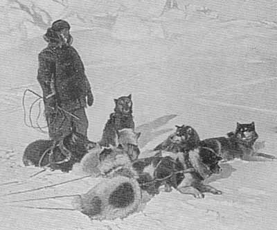 Dog Sleds For Sale In Canada