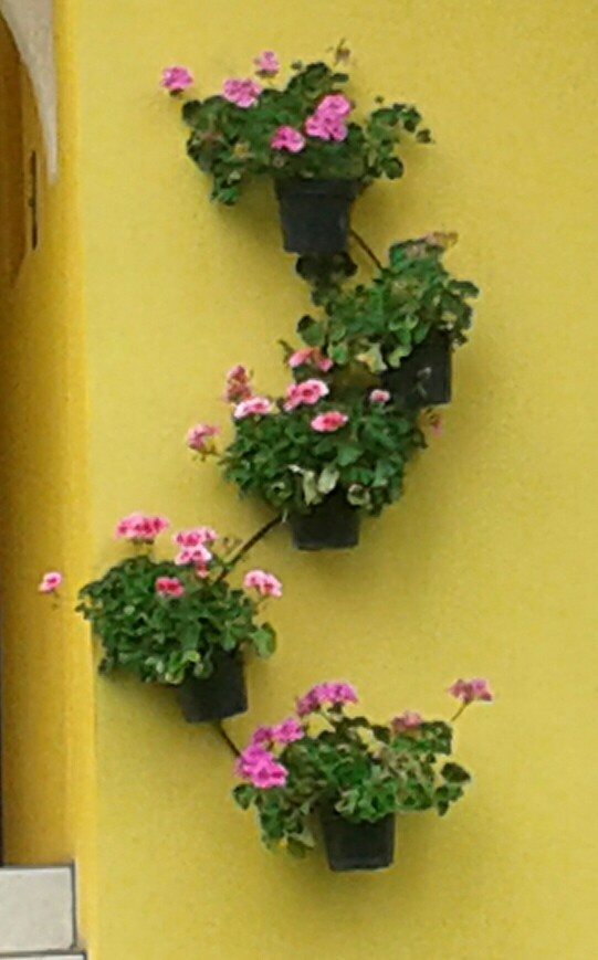 1000 images about jardines mexicanos on pinterest for Jardines pequenos mexicanos