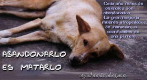 Bajar el IVA  de las Consultas y productos veterinarios para que el abandono animal pueda disminuir. La cantidad de animales abandonados en ...