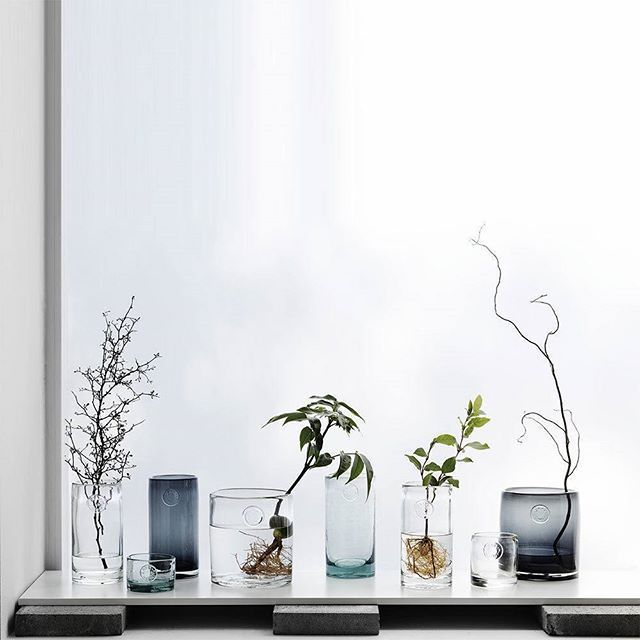 We have a thing for glass and our handblown clear glass vase' are stunning on their own or matched in set. Create your look straight from the garden. To find this search 'Handblown' on http://dtll.com.au (link in profile) #Handblown #Clear #Glass #Vase #herbs #c