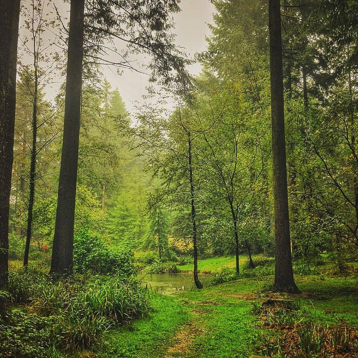 Center Parcs Longleat Forest, Wiltshire, England by thechrismorton