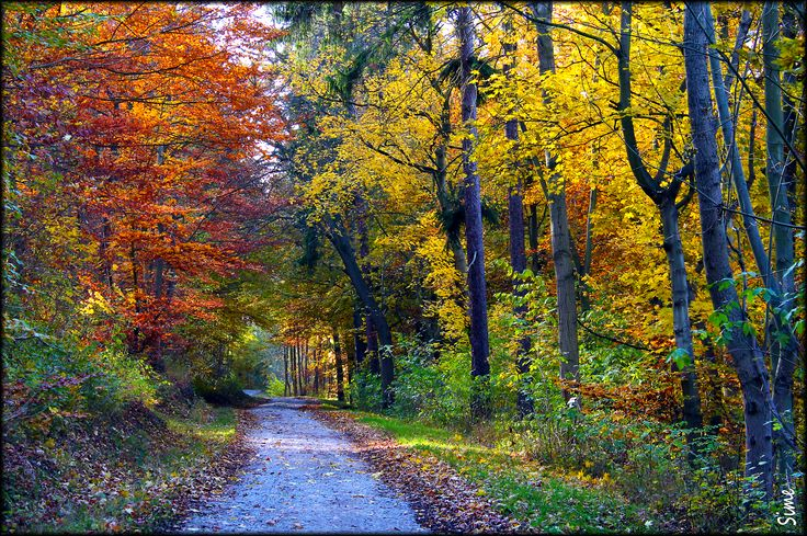 Wenns zu Ende geht, ist die Welt am buntesten. Wald bei Erfurt