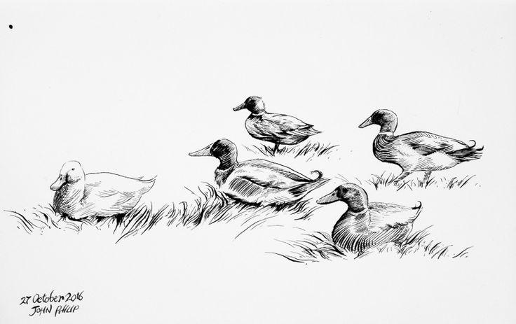 Day 27 - Ducks in Ink #inktober #inktober2016 http://www.johnphilip.co.za/?p=1449