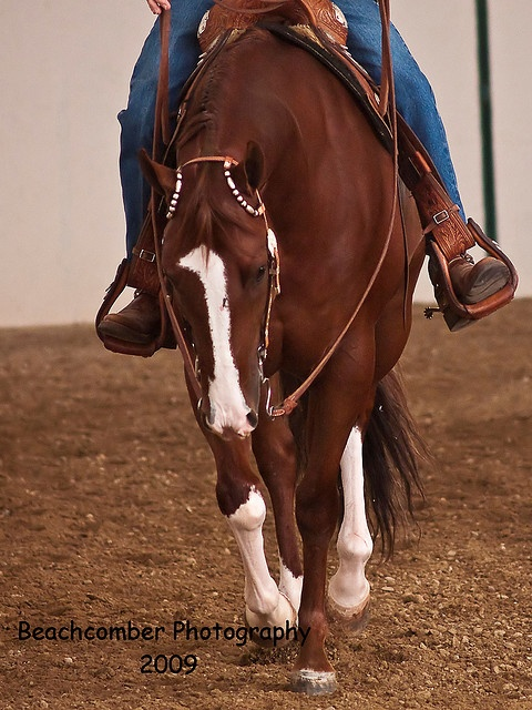 Western Pleasure Horse - I put in a lot of hours training horses for Western Pleasure.  It's a lot harder than you might think.