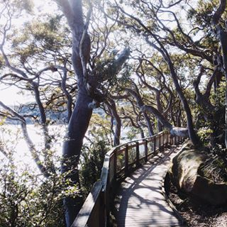 Bradley's Head, Mosman | 18 Magical Places You Won't Believe Are Actually In Sydney