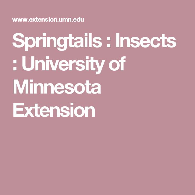 Springtails : Insects : University of Minnesota Extension