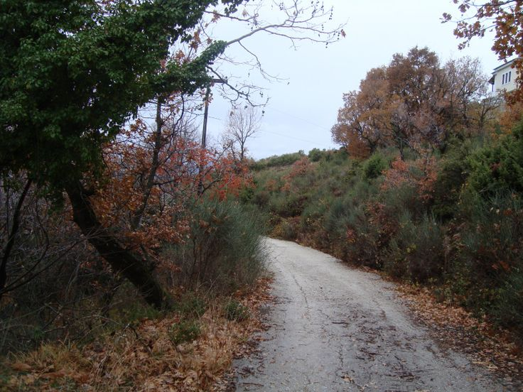 Out in the woods, Pilio http://goo.gl/yUeD7k #travel #greece #pilio
