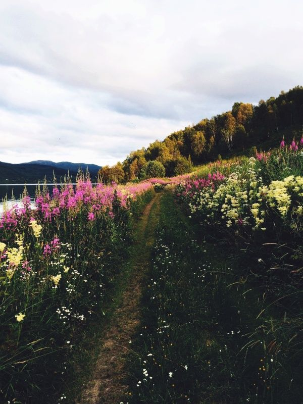 Norway | camillastorjord