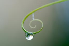 Spiral drop  by Vibrant Imaging