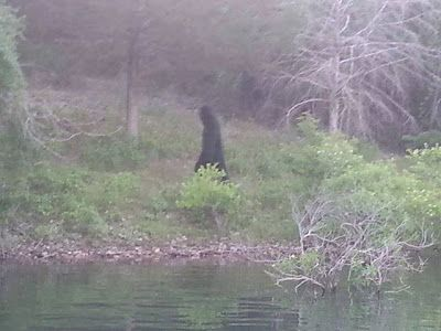 Possible bigfoot photo taken on July 4th, 2013 at Table Rock Lake in Kimberling City, Mo.
