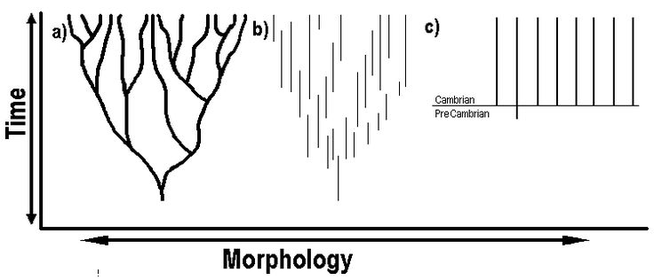 Darwin's theory (a) predicts that fossil transitions between different types of organisms will be found. When transitions were not found, evolutionists proposed punctuated equilibrium (b), where the transitional forms existed briefly, and were not fossilized. Model (C) represents the fossil record with regards to the origin of the phyla. The sudden appearance of organisms points to design, not evolution.