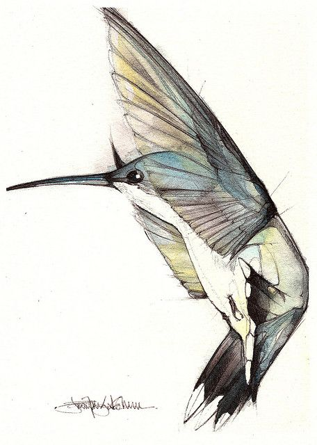 by Jennifer Kraska, via Flickr (watercolor and pen)