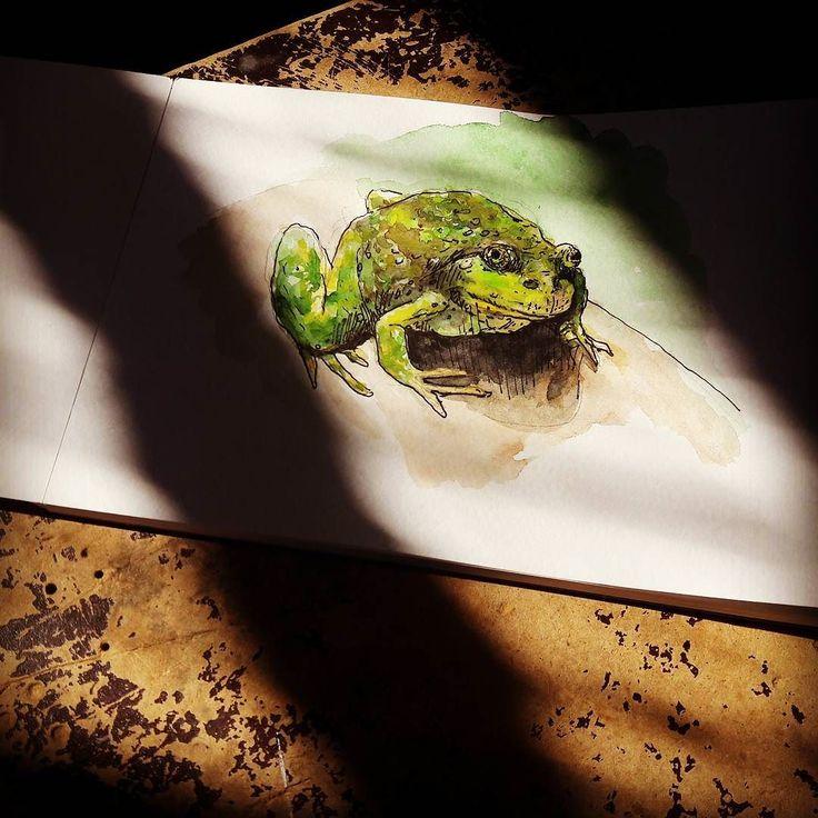 Квакушка. Мама боится их. Никого я не встречал кто боялся бы лягушек больше чем моя мама. Я змей боюсь а лягушек не боюсь. Ящериц опасаюсь потому что они немного змеи. А лягушки... Их насекомые должны бояться. Комары мухи... #drawing #illustration #watercolor #portrait #sketch #pencil #sketchbook #art #artwork #painting #topcreator #eskiz #портрет #рисунок #карандаш #набросок #эскиз #акварель