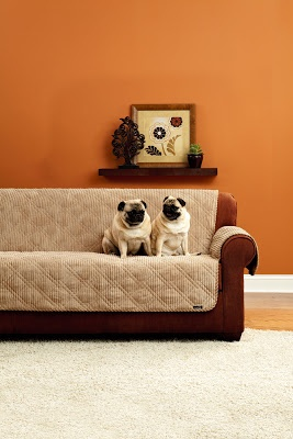 Life Is Ruff, Pet-proof your decor!