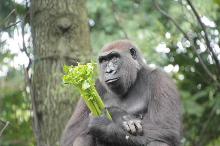 Lo Zoo del Bronx. Image from globemy.com