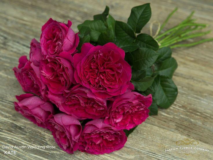 David Austin Wedding Rose Kate