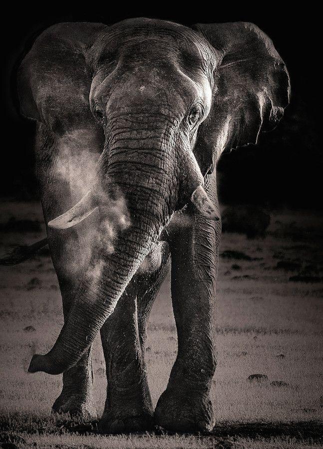 Les 1454 meilleures images du tableau Elephants sur Pinterest ...