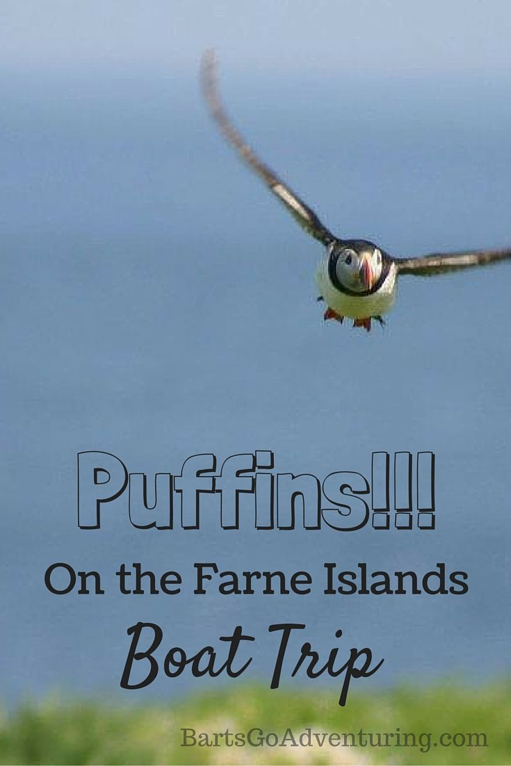 Farne islands boat trip in Northumberland UK to see Puffins!