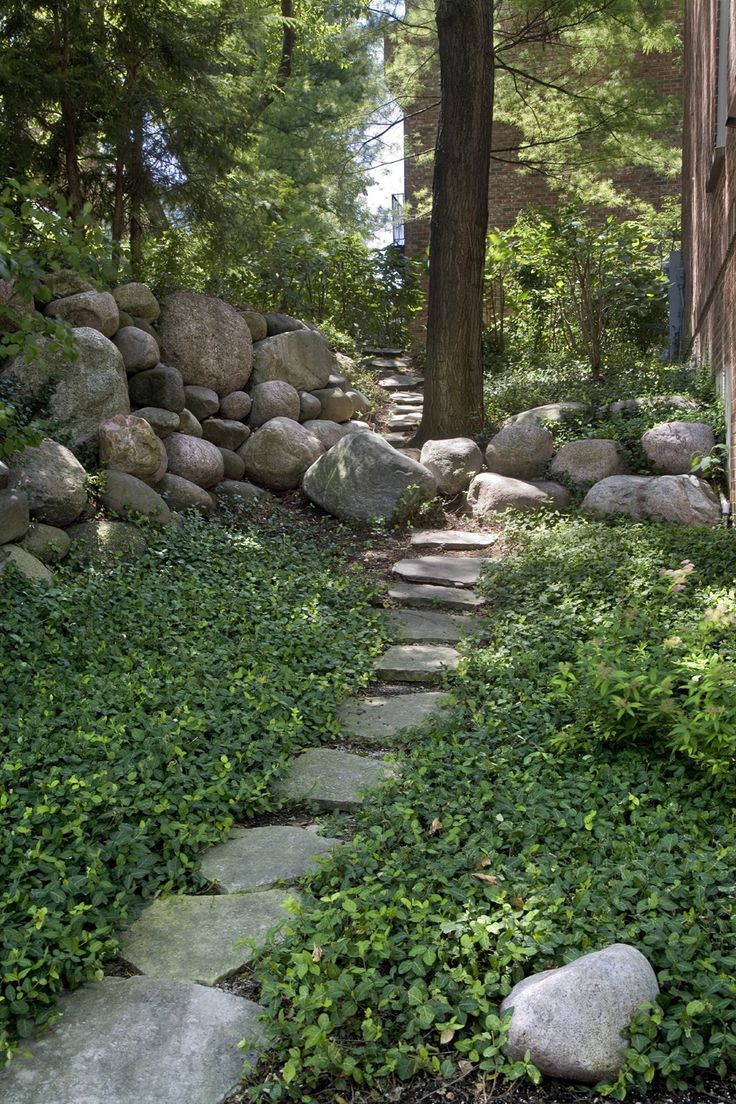 1000 Images About Ground Cover Ideas On Pinterest