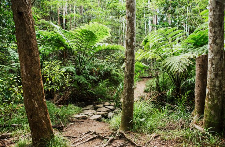 Here's a few things to add to your adventure bucket list—eight of the most beautiful bushwalks on and around the Sunshine Coast.