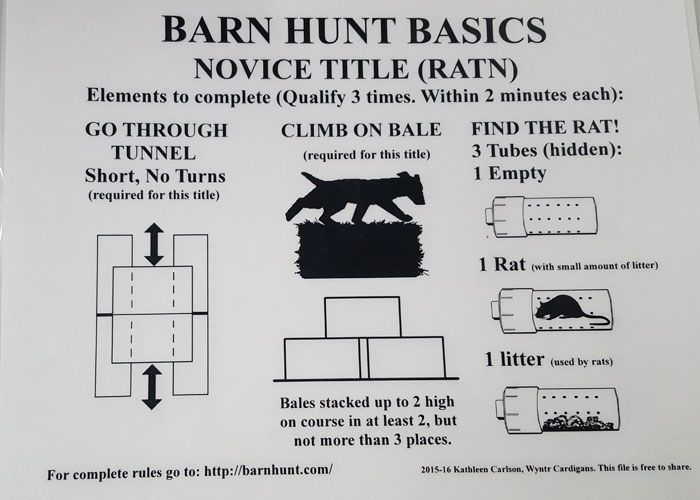 2 RATN Titles - A Successful Barn Hunt Weekend | Barn hunt