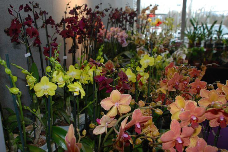 #Color-full! Colori e ancora colori negli stand ad #OrtoGiardino. Magnifiche #orchidee e tanti #fiori allietano i visitatori. #Green #gardening #LerianSrl