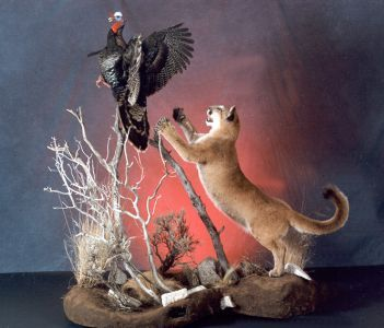 121 Best Images About Taxidermy On Pinterest Full Body