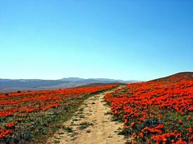 #ridecolorfully through Antelope Valley Poppy Reserve
