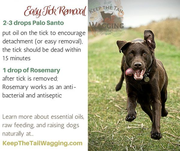 Easy Tick Removal for Dogs using Essential Oils
