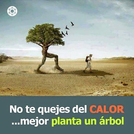 No te quejes del CALOR, mejor planta un árbol, proteccion ambiental, cuidado del medio ambiente