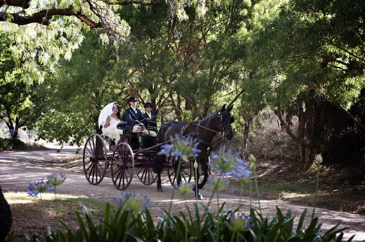 Arriving by Horse & Carriage @ Chateau Dore Winery.  Horse & Cart from Lora Jensen P 0432 876 565 Photography by Images by Gail www.imagesbygail.com.au