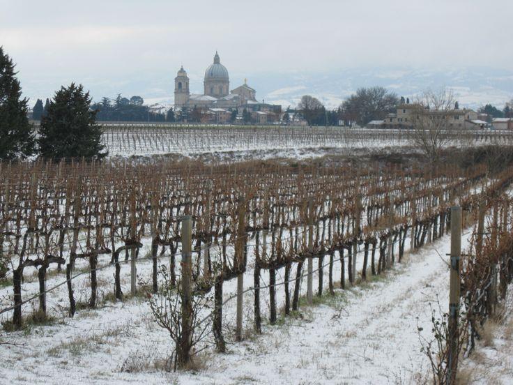 Snow on the vineyards and on the Basilica of Santa Maria degli Angeli February 2013