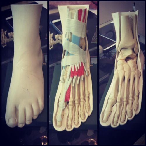 Vintage medical foot model Photo credit: The Little Leviathan