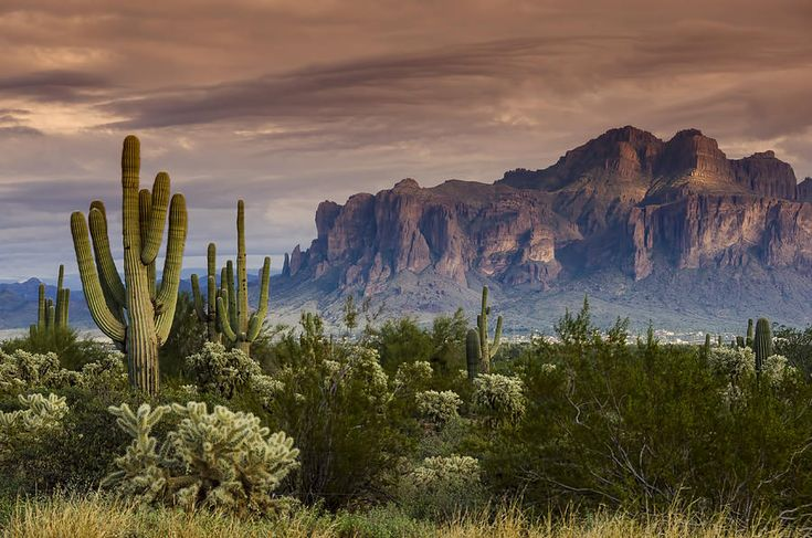 Superstition Mountains Photograph - Serenity Of The Sonoran  by Saija  Lehtonen