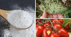 Ukážeme vám sódu v trochu inom svetle - ako perfektnú pomôcku pre každého pestovateľa. Naučte sa, ako pežnú prísadu z kuchyne využiť v záhrade či pri izbových rastlinách.