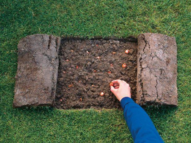 How to Plant Bulbs in Grass - Planting Bulbs : HGTVGardens