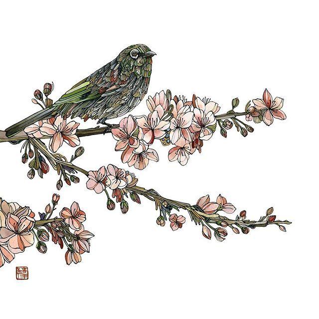 【rika_nagahata】さんのInstagramをピンしています。 《'Hidamari' Watercolour and Ink  2016  #art #drawings #watercolour #ink#bird #wellington #newzealand #silvereye #cherryblossom #flowers#art_help #theartshed#animalcreatives #アート#桜 #絵#ニュージーランド#鳥》