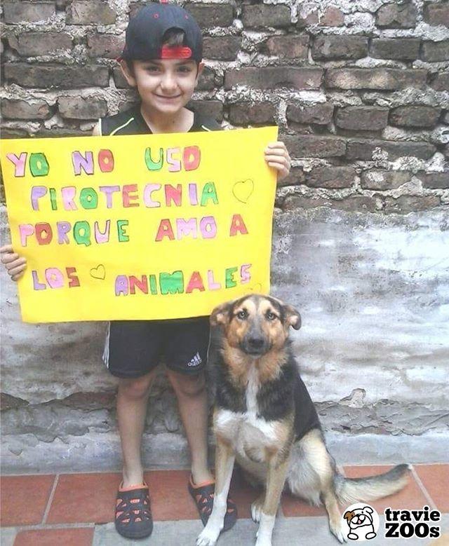 Estamos A Punto De Finalizar Un Gran Ano Pero Por Favor No Usemos Pirotecnia En Las Celebraciones Dog Perros Piro Animales Animales Divertidos Amor De Perro