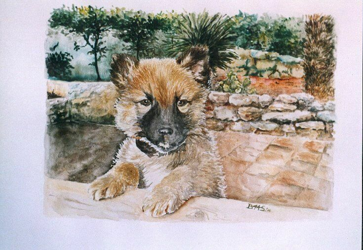 Dog-Water color