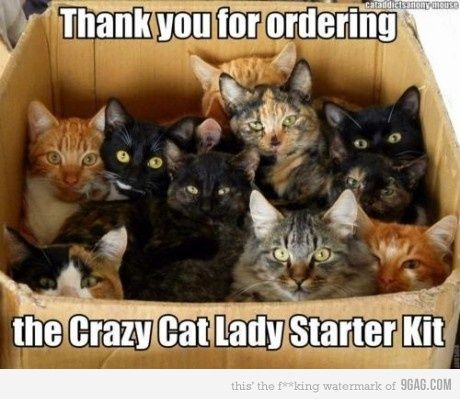 : Crazy Cats, Lady Starter, Animals, Crazycatlady, Funny, Crazy Cat Lady