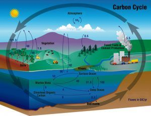 manfaat laut menyerap karbon