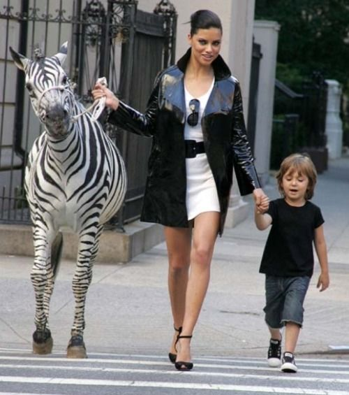 Zebras  If a pet horse seems to tame, why not try a zebra. You can have one of your very own for about $4,000. They eat and act in much the same way as horses. You can even convince your pet to let you ride it with a lot of patience and dedication.