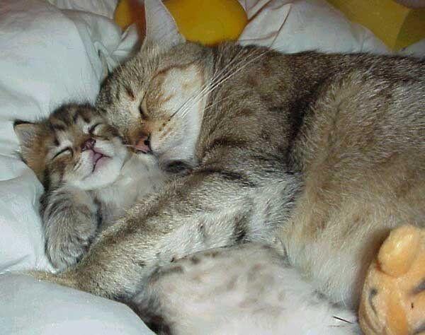 Awwwwwwwwwww..... Flippin adorable!
