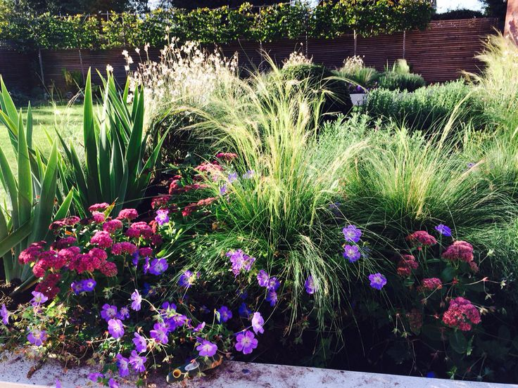 Liz Rentsch Garden Design | Plant Combinations | Pinterest