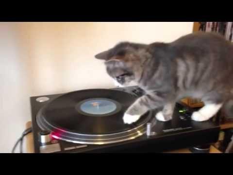 Gato e um gira-discos