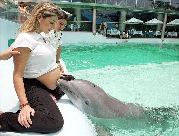 Dolphin Therapy | Stimulate the Brain Development in the Baby.